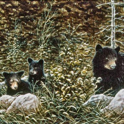 blackbears-twilight-glade