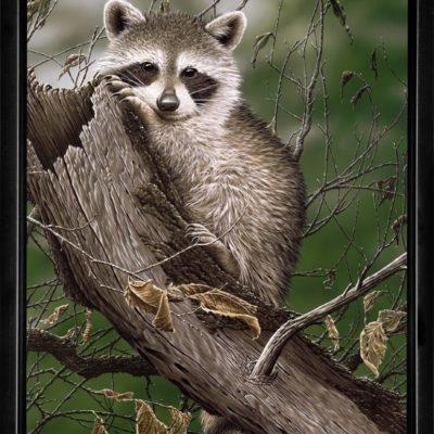 bandits-framed